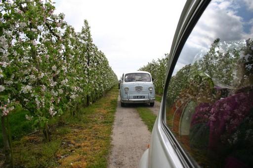 Rijden door de boomgaard met bloesem